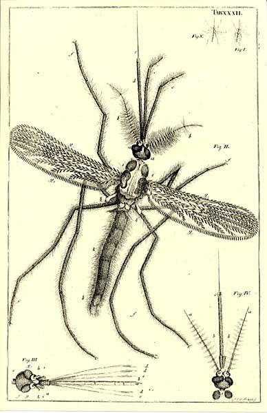 насекомые и их знаком