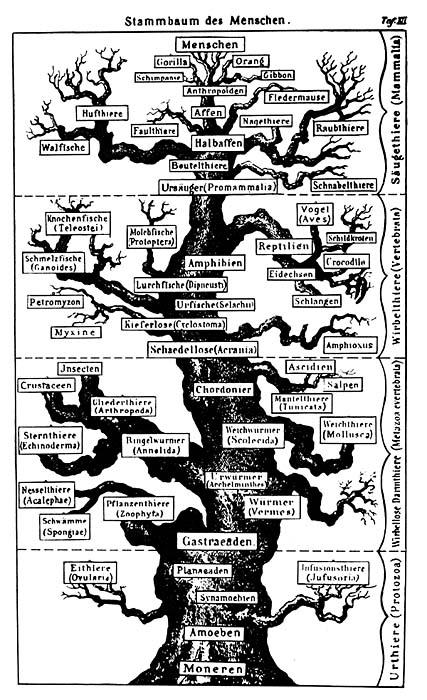 древе органического мира